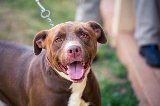 Lançada companha de adoção de animais do abrigo municipal