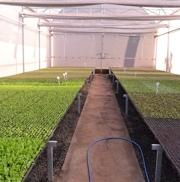 Desenvolvimento Agropecuário